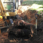 Tree stump removal in Perth