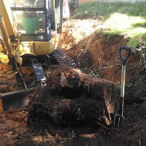 Tree stump removal in Perth